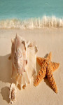 Seashell and Starfish Live Wallpaper Free screenshot 3/4