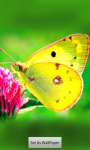 Butterfly HD Wallpapers screenshot 3/5