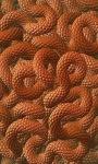 Snakes Skins Live Wallpaper screenshot 1/4