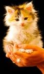 Cat Baby Live Wallpaper screenshot 1/3