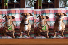 Dogs Spot the Difference screenshot 1/2