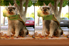 Dogs Spot the Difference screenshot 2/2