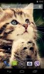 Cute Cats Live Wallpaper 3D screenshot 1/4
