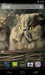 Cute Cats Live Wallpaper 3D screenshot 3/4