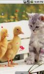 Lovely Cat and Ducks Live Wallpaper screenshot 1/4
