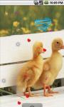 Lovely Cat and Ducks Live Wallpaper screenshot 2/4