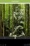 Forest beautiful wallpaper HD  screenshot 1/3