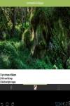 Forest beautiful wallpaper HD  screenshot 2/3