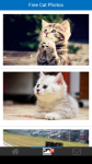 Free Cat Photos screenshot 2/6
