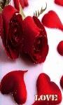 Valentine Rose Lwp screenshot 1/3