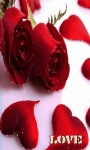 Valentine Rose Lwp screenshot 3/3