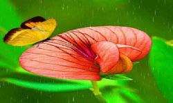 Butterfly In Rain Live Wallpaper screenshot 2/3