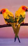 Birds HD Walls screenshot 5/5