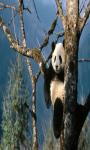 Panda Live Wallpaper Best screenshot 2/4