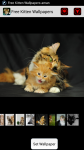 Free Kitten Wallpapers screenshot 1/4