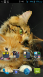 Free Kitten Wallpapers screenshot 4/4