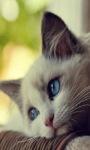 Sad Cat Live Wallpaper screenshot 2/3