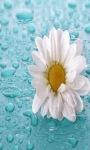 White Rainy Flower LWP screenshot 2/3