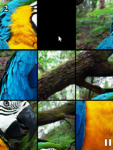 Animals Funitto screenshot 2/4