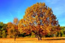 Amazing Autumn Trees Wallpaper screenshot 1/6