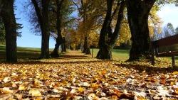 Amazing Autumn Trees Wallpaper screenshot 2/6