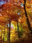 Amazing Autumn Trees Wallpaper screenshot 3/6
