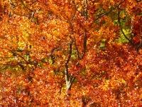 Amazing Autumn Trees Wallpaper screenshot 5/6