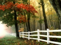 Amazing Autumn Trees Wallpaper screenshot 6/6