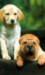 Dog Wallpapers Android Apps screenshot 1/6