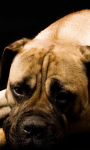 Dog Wallpapers Android Apps screenshot 2/6