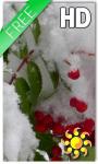 Winter Berry Live Wallpaper screenshot 1/2