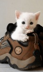 White Cat Baby LWP screenshot 2/3