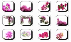 Bougainvillea Flowers Onet Classic Game screenshot 2/3