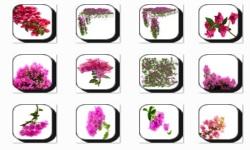 Bougainvillea Flowers Onet Classic Game screenshot 3/3