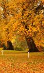 Autumn wallpaper images screenshot 2/4