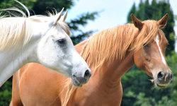 Beautiful wild horses screenshot 1/5