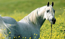 Beautiful wild horses screenshot 2/5