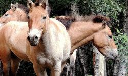 Beautiful wild horses screenshot 4/5