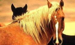 Beautiful wild horses screenshot 5/5