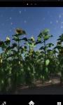 Sunflowers Downhill Live Wallpaper screenshot 1/1