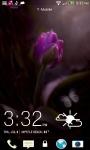 Purple Raining Tulip LWP screenshot 3/3