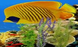 Under Water Nature Live Wallpaper screenshot 2/3