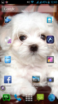Baby Dogs Pictures screenshot 6/6
