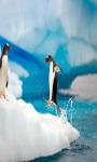 Penguins Live Wallpaper Free screenshot 3/4