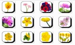 Buttercup Flowers Onet Classic Game screenshot 1/3