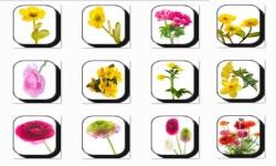 Buttercup Flowers Onet Classic Game screenshot 3/3