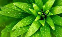 Pic of Green wallpaper  screenshot 4/4