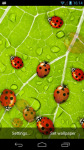 Ladybug Live Wallpaper LWP  screenshot 1/3