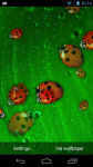 Ladybug Live Wallpaper LWP  screenshot 2/3