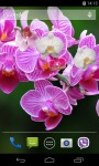 Orchid Live Wallpaper 3D screenshot 2/3